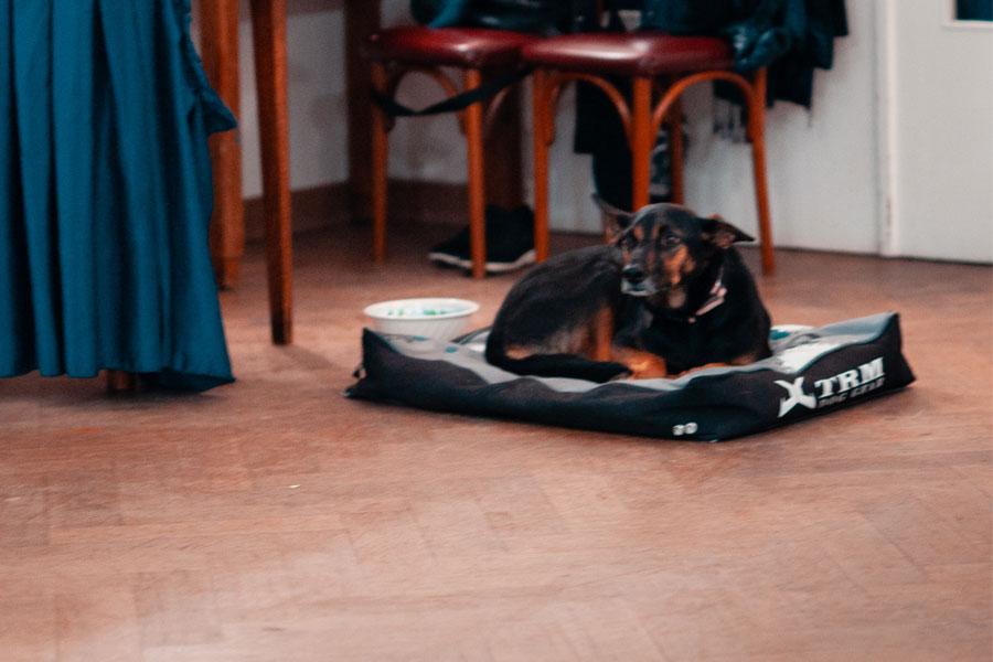 dance studio brussels dog